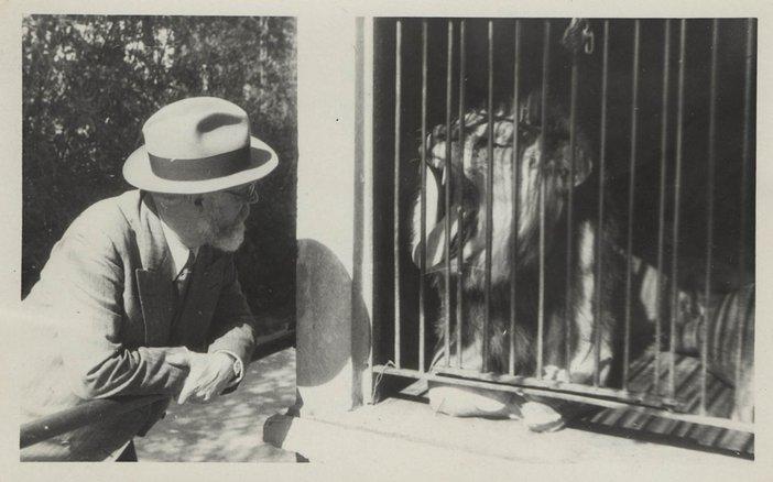 Matisse and animals lion