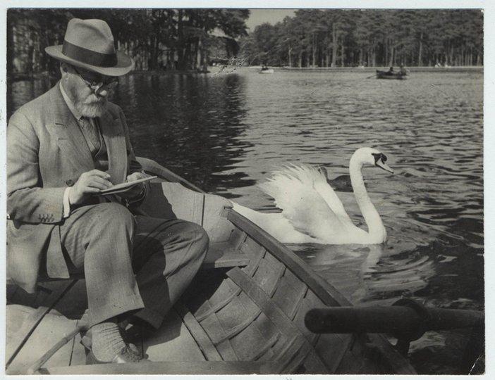 Matisse and animals white swan