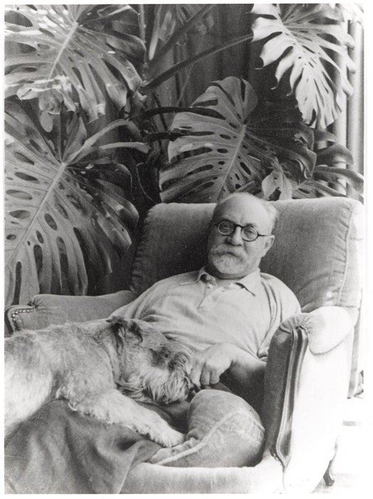 Matisse and animals dog and palms