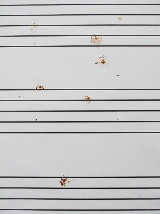Kelly Morrison, Birdscore; Notes created on Madryn Street