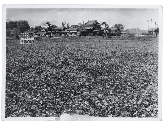 A flower field in the Nakatsutaya seed nursery owned by Yayoi Kusama's family in Matsumoto, Japan