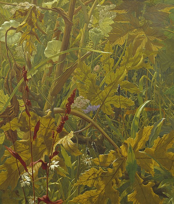 Undergrowth tempera painting by Eliot Hodgkin.