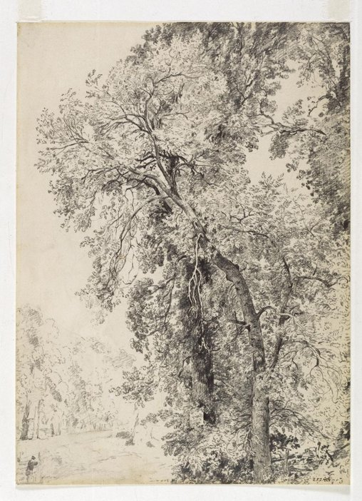 John Constable Study of Ash Trees c.1821