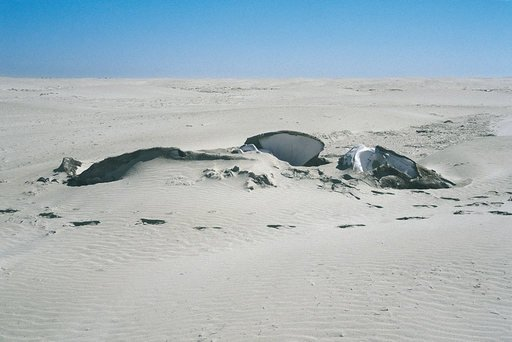 Gabriel Orozco Whale in the Sand 2006 grey whale skeleton embedded in the desert sand partially exposed