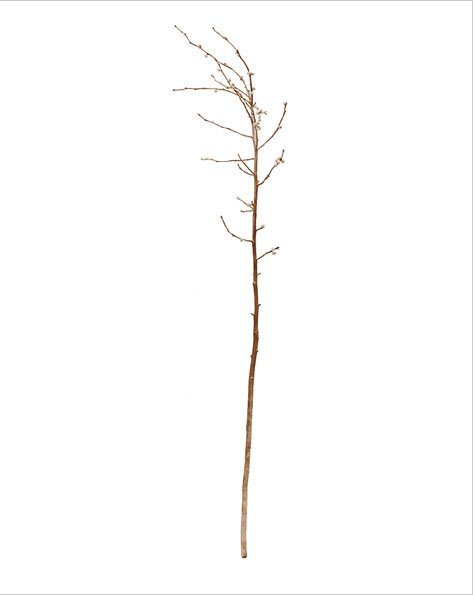Anya Gallacca Cast bronze branch made for the Turner Prize exhibition