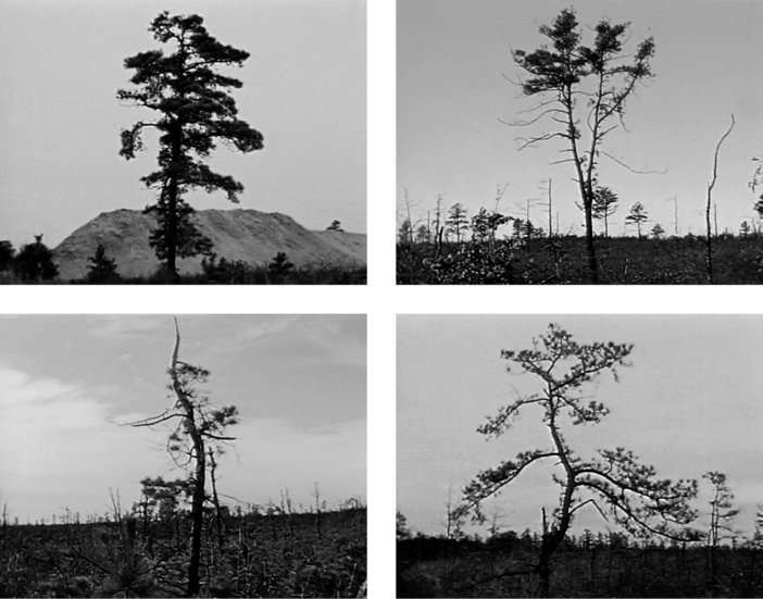 Four film stills from Nancy Holt's Pine Barrens, 1975