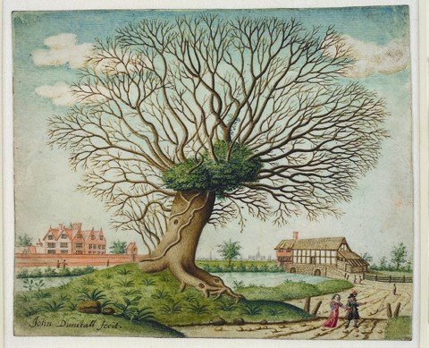 John Dunstall 'A Pollard Oak near West Hampnett Place, Chichester' c1660