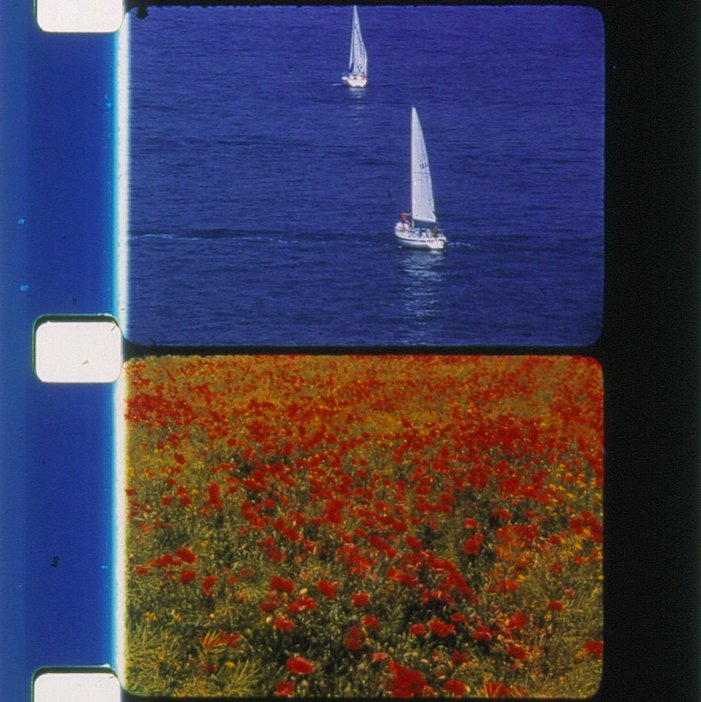 Rose Lowder Voiliers et coquelicots 2001, film still showing sailboats in top frame and a field of red flowers in bottom frame