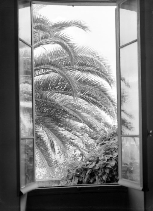View of plams from the window at the Villa le Reve