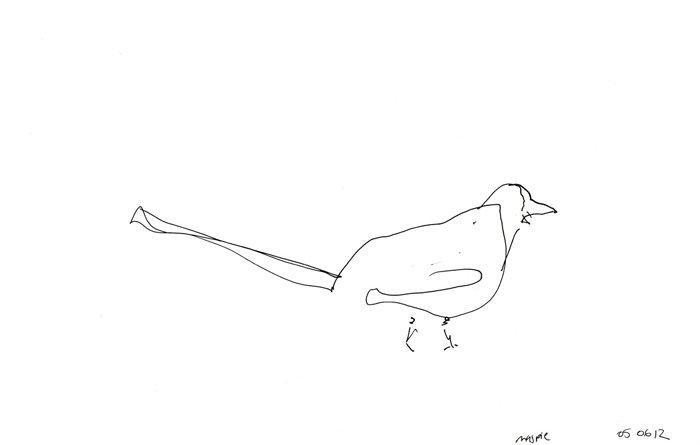 Sketch of a magpie Tate Liverpool