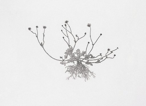 Etching Nourishment, Creeping Buttercup by Michael Landy.