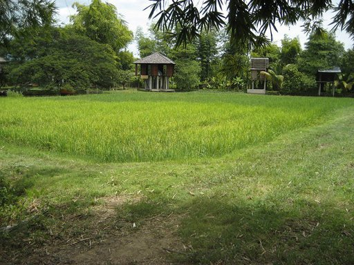 Part of the self sustaining community near the village of Sanpathong Chaing Mai Thailand initiated by Rirkrit Tiravanja and Kamin Letchaipresert photo of trees fields and wooden hut structures