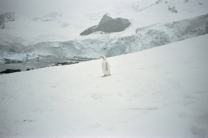 Pierre Huyghe A Journey that wasn't 2005 still two