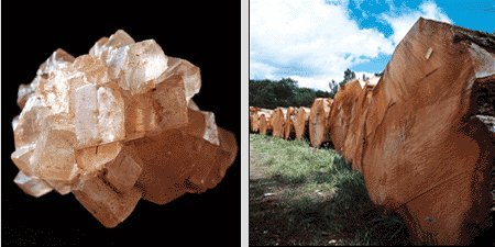 Left: A sugar crystal: rght: newly felled oak trees at Englefield, near Reading