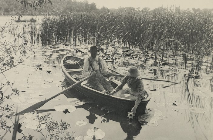 Peter Henry Emerson, Gathering Water-Lilies, 1886