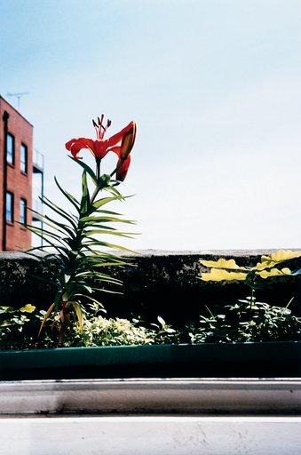 Wolfgang Tillmans Lily & Oak 1999 Photograph