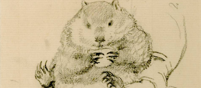 Rossetti's wombat, seated in his master's lap