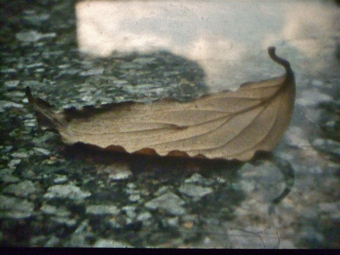 Ute Aurand, Young Pines, 2011, film still Courtesy the artist