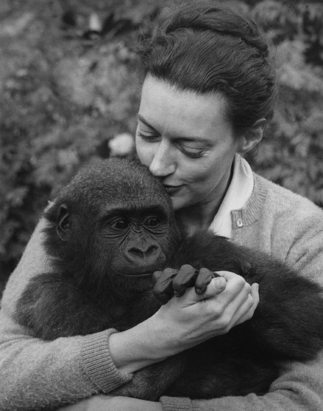 Wolf Suschitzky Beatrice with ape