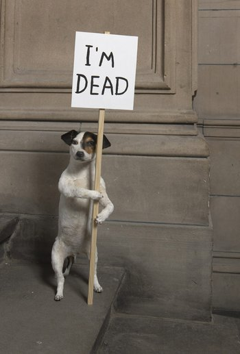 I'm Dead 2010 © David Shrigley, courtesy Collection Hamilton Corporate Finance Limited, Image courtesy Kelvingrove Art Gallery and Museum