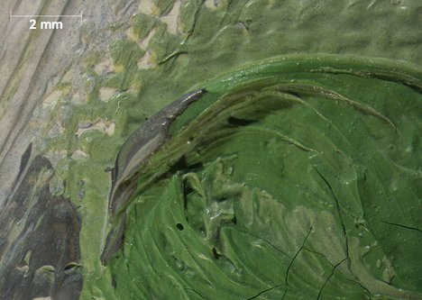 Micrograph of light green bead with grey paint from outline of hand