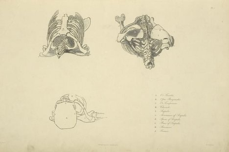 After John Flaxman Plate 3 [Three views of bones of the upper torso] from Anatomical Studies of the Bones and Muscles, for the Use of Artists, engraved by Henry Landseer, published 1833