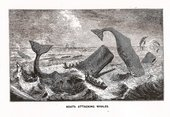 Philip Hoare on Leviathan: the film shot in the waters of Moby Dick