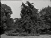 Still image of Gilbert and George - In the Bush