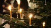 Still image of Tacita Dean's Christmas Tree