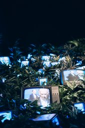 tv screens surrounded by plants