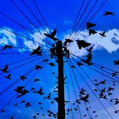 Birds flocking around a utility pole