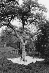 Maria Bartuszová's Tree 1987, consisting of a plum tree, plaster, string, plastic, foil and paper, in the artist's garden in Košice, Slovakia