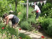 people working on a garden