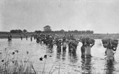 Carriers transporting stores across the Chambeshi River in Zambia, Southern Africa, as part of the Tanganyika Expeditionary Force during the First World War