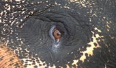 Film still of the eye of an elephant