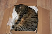 Cat sleeping in cardboard box