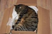 Cat sleeping in cardboard box