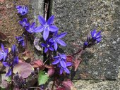 violet flowers growing on a wall