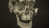 Vidokle film still close up of a skull