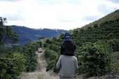 A child on an adult's shoulders walking through the coffee fields