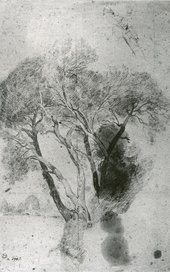 A drawing of a tall tree.