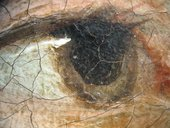 Fig.22 Detail of the sitter's right eye at x8 magnification, showing wet-in-wet brushwork