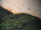 Fig.5 Detail at x8 magnification of the drapery on the sitter's left shoulder as it meets the background