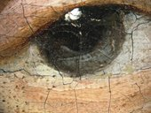 Fig.8 Detail of the sitter's right eye at x8 magnification, showing wet-in-wet brushwork
