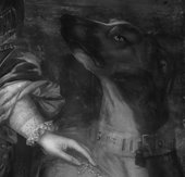 Fig.9 Infrared reflectograph detail of the dog's head and collar