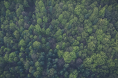 Image of a green forest from above
