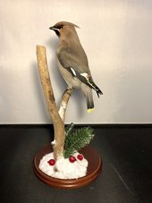 a taxidermy bird sits on a branch