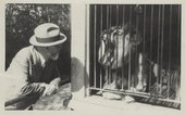 Matisse and animals lion