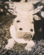 Alexander Calder, cow mask for a cat