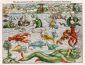 Sebastian Munster, Chart of Sea Monsters 1550